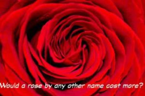 red_rose_edited-1